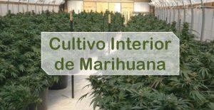 Cultivo de Marihuana Interior
