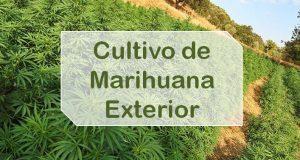 Cultivo de Marihuana Exterior
