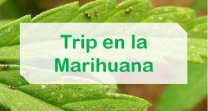 Trip Marihuana